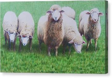 Friends Canvas Print by Constance Drescher