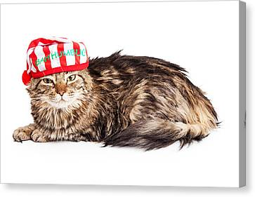 Funny Grumpy Christmas Cat Canvas Print by Susan Schmitz