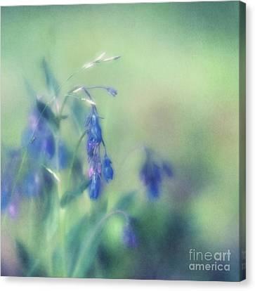 Bluebells Canvas Print by Priska Wettstein