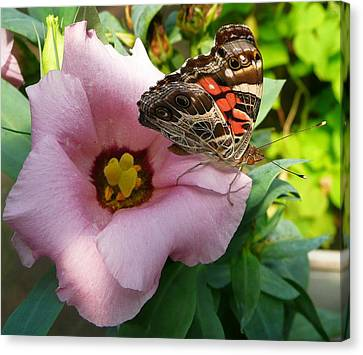 Garden Visitor Canvas Print