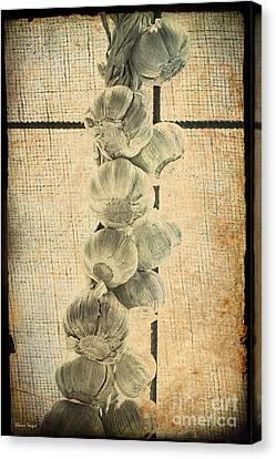 Garlic Canvas Print by Elaine Teague