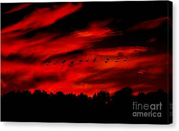 Canvas Print - Geese Setting  by Kim Pate