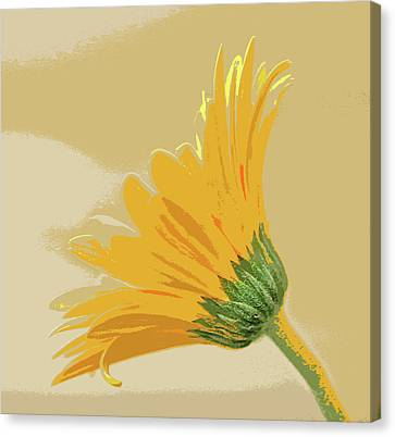 Gerbera Abstract Canvas Print by Bill Morgenstern