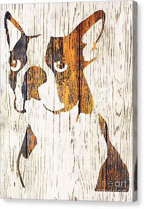 Boston Terrier Animals Acrylic Dog Portraits Pet Portraits Animal Portraits Canvas Print - Golden Boston by Barbara  Campbell