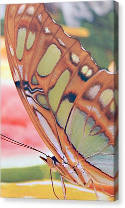 Golden Butterfly Canvas Print by Don  Wright
