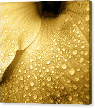 Golden Droplets Canvas Print by Sean Davey