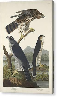 Prey Canvas Print - Goshawk And Stanley Hawk by Dreyer Wildlife Print Collections