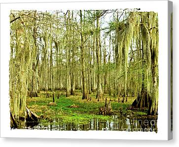 Grand Bayou Swamp  Canvas Print by Scott Pellegrin