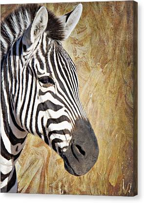 Grant's Zebra_a1 Canvas Print