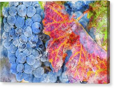Grapes On The Vine In The Autumn Season Canvas Print by Brandon Bourdages