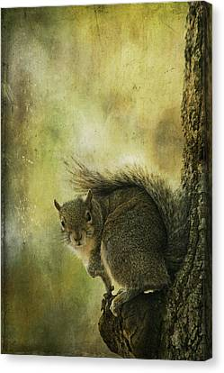 Gray Squirrel Canvas Print