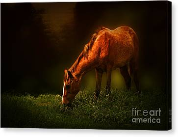 Grazing Canvas Print by Charuhas Images
