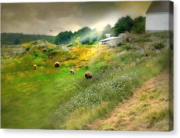Maine Farms Canvas Print - Grazing In The Grass by Diana Angstadt