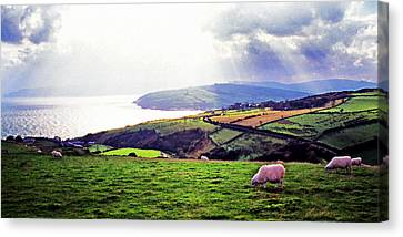 Grazing Sheep County Antrim Canvas Print by Thomas R Fletcher