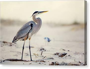 Great Blue Heron  Canvas Print by Joan McCool