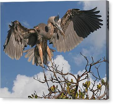 Great Blue Heron Canvas Print by Larry Linton