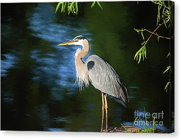 Great Blue Canvas Print by Scott Pellegrin