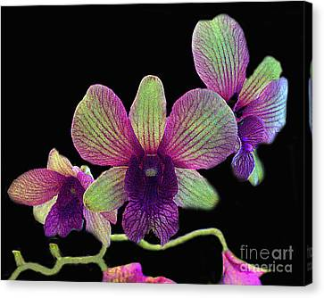 Canvas Print featuring the photograph Green And Maroon Orchids by Merton Allen