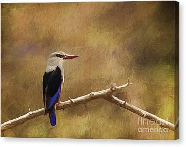 Grey-headed Kingfisher  Halcyon Leucocephala Canvas Print by Liz Leyden