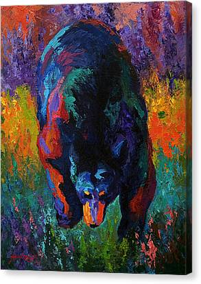 Grounded - Black Bear Canvas Print by Marion Rose