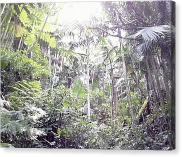 Guilarte's Forest Canvas Print