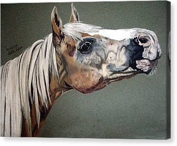 Canvas Print featuring the drawing Haflinger by Melita Safran