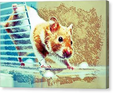 Gerbil Canvas Print - Hamster by Tom Gowanlock
