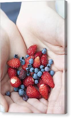 Hands Holding Berries Canvas Print by Elena Elisseeva