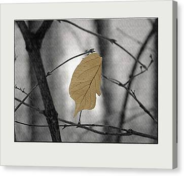 Hanging In The Balance Canvas Print by Sue Stefanowicz
