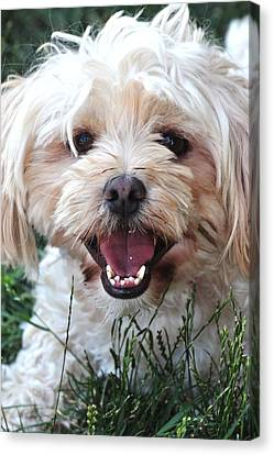 Happy Dog Canvas Print by Lisa  DiFruscio