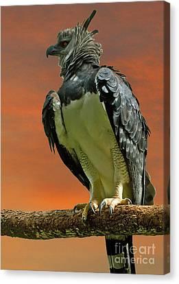 Harpy Eagle Canvas Print - Harpy Eagle by Larry Linton
