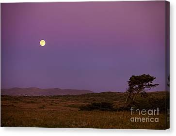 Harvest Moon Over Bodega Bay Canvas Print by Diane Diederich