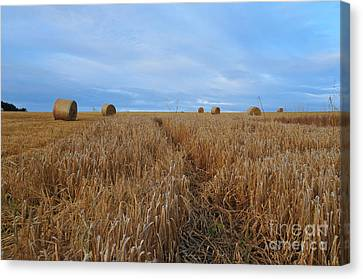 Bales Canvas Print - Harvest by Nichola Denny