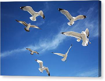 Heavenly Seagulls Canvas Print