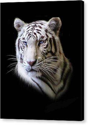 Tiger Canvas Print - Hector by Julie L Hoddinott