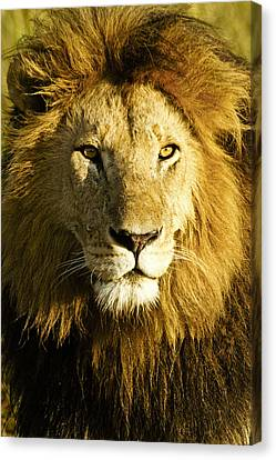 His Royal Highness Canvas Print by Michele Burgess