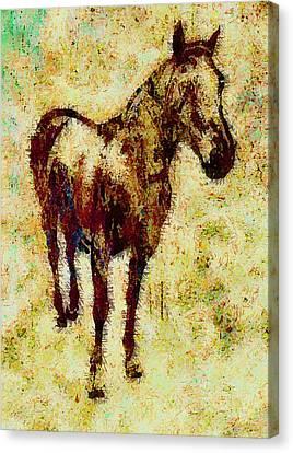 Horse Canvas Print by Elena Kosvincheva