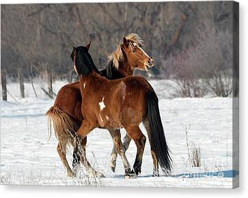 Canvas Print featuring the photograph Horseplay by Mike Dawson