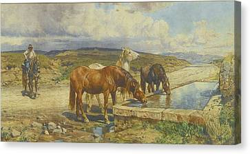 Horses Drinking From A Stone Trough Canvas Print by Enrico Coleman