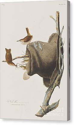 Wren Canvas Print - House Wren by John James Audubon