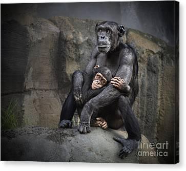Chimpanzee Canvas Print - Hugs by Jamie Pham