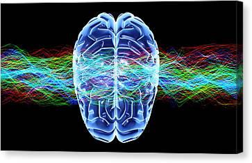 Human Brain, Conceptual Artwork Canvas Print by Pasieka