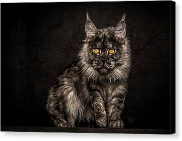 Canvas Print featuring the photograph Hunting Mode by Robert Sijka