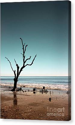 Canvas Print featuring the photograph I Can Be Free by Dana DiPasquale