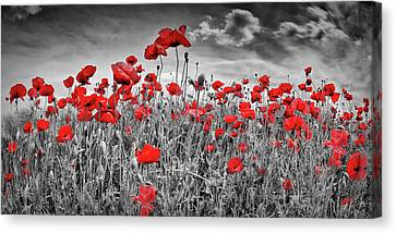 Idyllic Field Of Poppies Panoramic Colorkey Canvas Print by Melanie Viola