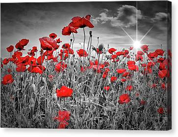 Idyllic Field Of Poppies With Sun Canvas Print by Melanie Viola
