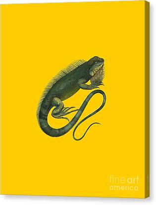 Iguana Canvas Print by Sergey Lukashin