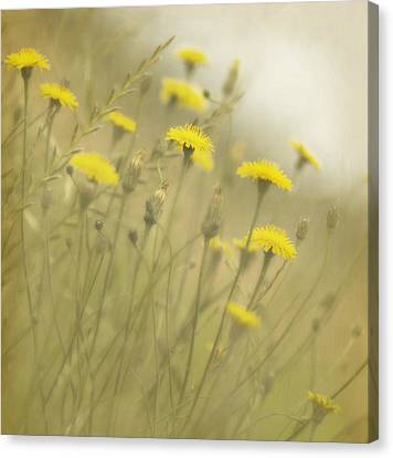 In The Mist Canvas Print by Rebecca Cozart