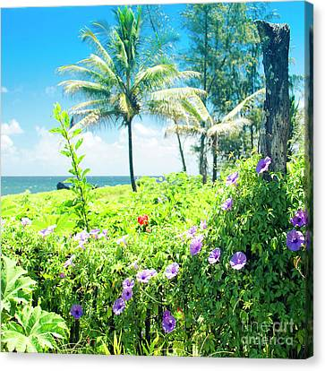 Canvas Print featuring the photograph Ipomoea Keanae Morning Glory Maui Hawaii by Sharon Mau