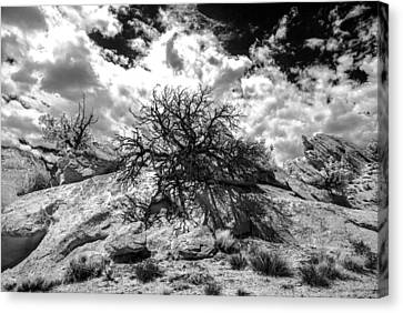 Ir Tree Escalante Canvas Print